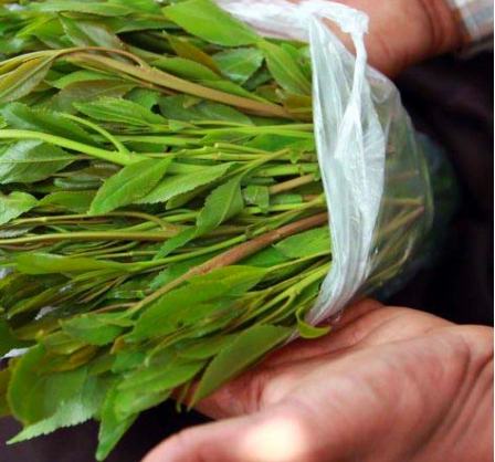 A man holding khat, source internet